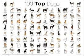 dog breed with pictures