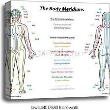 Meridian System Description Chart Female Body Canvas Print