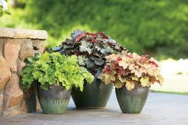 Small Picture Shade Loving Container Plants HGTV