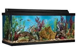best 75 gallon aquarium reviewed 2019