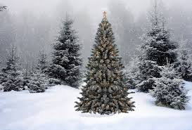 Wallpaper christmas, new year, christmas tree, snow, winter, forest