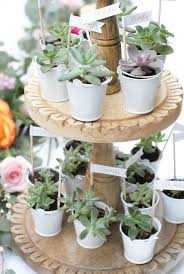 succulent party favors succulent