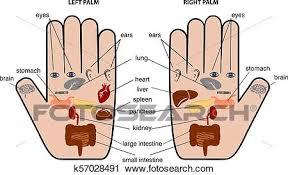 Hand Chart Hand Reflexology Chart Vector Illustration Clipart