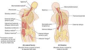 The spleen is an organ located in the upper left side of a person's abdomen. What Is The Reason For Sudden Lower Back Side Pain Quora