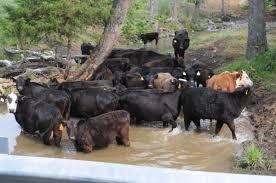 Insurance center of harrisonburg, harrisonburg, virginia. Report Farm Pollution High In Rockingham Augusta Rockingham County Dnronline Com