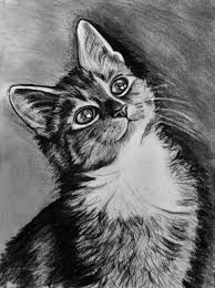 Disegno Gatto A Matita Ngebet