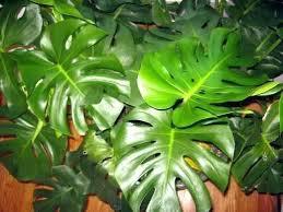 Weed Identification Tropical Plant Kew Families Handbook