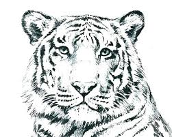 Cat Colouring Pages Printable Big Cats Coloring Pages Realistic Cat