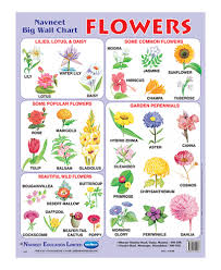 garden flower names. Exellent Garden Navneet Flowers Big Wall Chart In Garden Flower Names