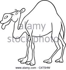 Small Picture Dromedary Camel Hoof Stock Photos Dromedary Camel Hoof Stock