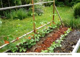 Small Picture The 25 best Bean trellis ideas on Pinterest Growing runner