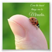 Ladybug Quotes Adorable Ladybug Tiny Miracles Quote Square Photo Print Zazzle