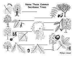 232 Best Espalier Images On Pinterest  Espalier Fruit Trees Fruit Tree Shapes
