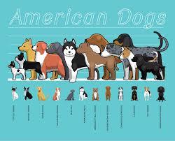Australian Shepherd Size Chart Australian Shepherd The Ghost Eyed Herding Dog