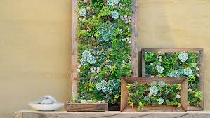 diy vertical succulent wall planters