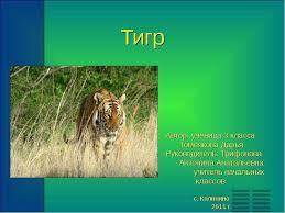 Реферат Тигр его характеристика Биология Реферат про тигра 1 класс