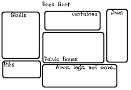 Owl Pellet Bone Chart Owl Pellet Bone Sort