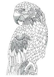 Printable Realistic Bird Coloring Pages Realistic Bird Coloring