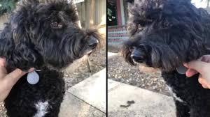 Doggi Dreams - Pets <b>Smart Mini GPS Tracker</b> | Facebook