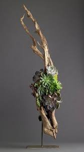 You can also turn a piece of driftwood into a terrarium.