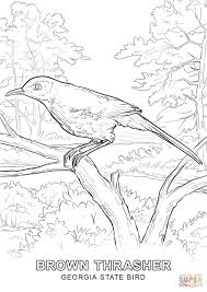 Click The Georgia State Bird Coloring