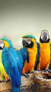 Mocking Bird Animal Nature Android ...