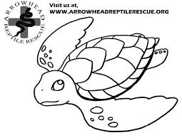 Small Picture Arrowhead Reptile Rescue