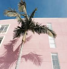 Pink building palm tree Tumblr image 4529091 by LuciaLin on