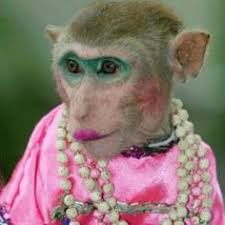pictures of monkeys funny monkey pictures 1 fitness humor funny fitness funny
