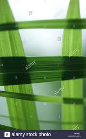 Blades of grass crossing each other close up Stock Photo 21015762