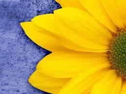 Colors.   Mother nature, Flowers, Color blending