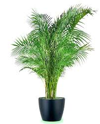 indestructible houseplant tropical pictures of common houseplants identify my houseplant pictures of common houseplants