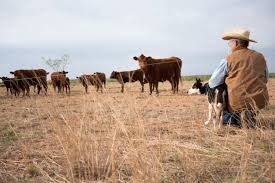 literary analysis essay on animal farm
