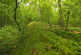 preserving forest essay competitive exams essay forests need for conservation examrace