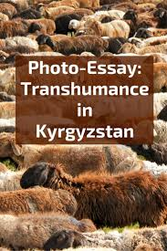 photo essay summer transhumance in  photo essay summer transhumance in