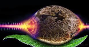 Gamma Radiation For Decontamination Of Medicinal Cannabis