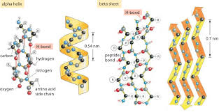 Hydrogen Bonding What Is The Energy Of A Hydrogen Bond