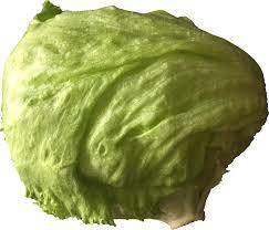 lettuce clipart. Perfect Lettuce Lettuce Intended Clipart E
