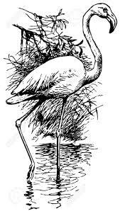 12486948 Bird Flamingo Stock Vector Drawing