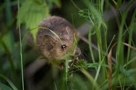 how to get rid of mice in your backyard