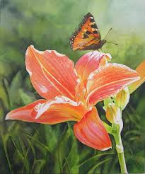 watercolor flower painting orange daylily with erfly