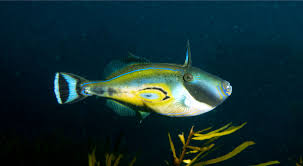 Australian Reef Fish Species Chart Get To Know The Fish Of Reef Cam