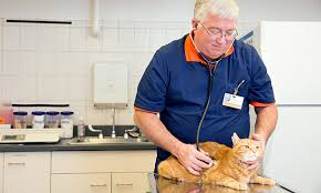 senior cats at risk for hyperthyroidism