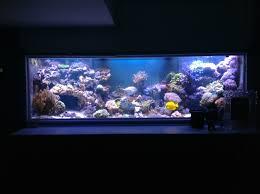orphek atlantik led lights review by customer
