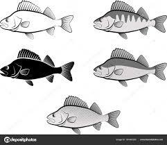 スズキ魚とラインアートのシルエット ストックベクター Mtmmarek