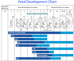 49 Exhaustive Baby Development By Week Chart
