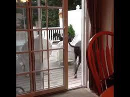 animat dog opens sliding glass door