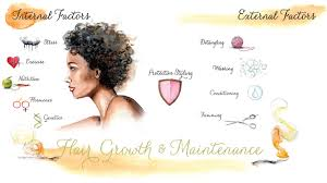Intro To Hair Growth And Maintenance Chart