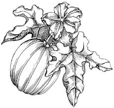 pumpkin drawing. halloween image gallery learn how to draw a pumpkin and other flowers plants with our drawing