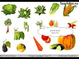 Курсовая на тему блюда из овощей Овощи Значение овощей в питании человека